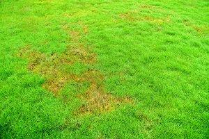 lawn turf rust control