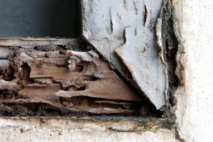 Termite Control Austin Texas